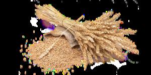 Grain PNG Picture PNG Clip art