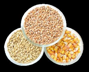 Grain PNG Transparent Image PNG Clip art