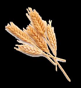 Grain Transparent Images PNG PNG Clip art