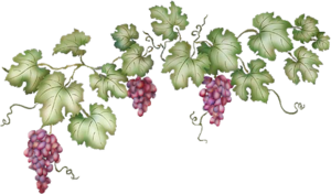 Grapevine PNG Clipart PNG Clip art