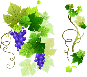 Grapevine PNG Free Download PNG Clip art