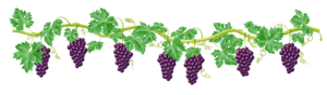 Grapevine PNG Image PNG Clip art