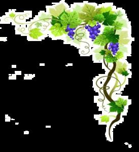 Grapevine PNG Transparent Image PNG Clip art