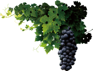 Grapevine PNG Transparent PNG icon