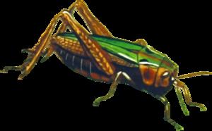 Grasshopper PNG File PNG Clip art