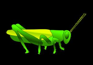 Grasshopper PNG HD PNG Clip art
