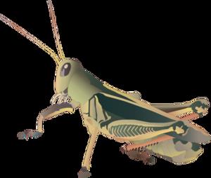 Grasshopper PNG Picture PNG Clip art