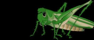 Grasshopper Transparent Background PNG Clip art