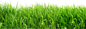 Green Background PNG Image PNG Clip art