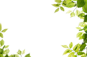 Green Background PNG Transparent Image PNG icon
