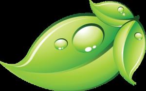 Green Leaf Transparent Background PNG Clip art