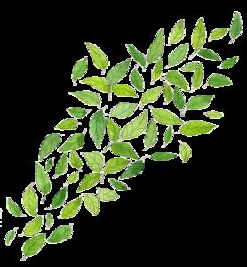 Green Leaf Transparent Images PNG PNG Clip art