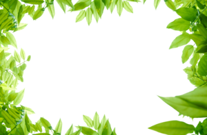 Green Leaves PNG Photos PNG Clip art