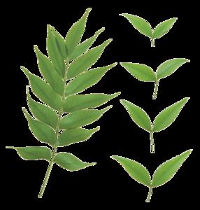 Green Leaves Transparent PNG PNG Clip art