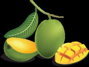 Green Mango PNG PNG Clip art