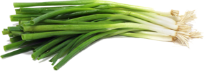 Green Onion PNG File PNG image