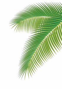 Green Palm Leaves PNG Clipart PNG Clip art