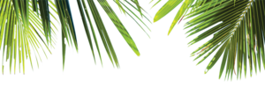 Green Palm Leaves PNG Free Download PNG Clip art