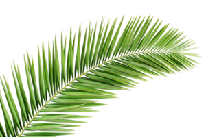 Green Palm Leaves PNG HD PNG Clip art