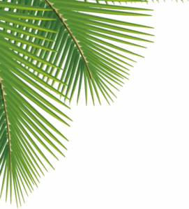Green Palm Leaves PNG Image PNG icon