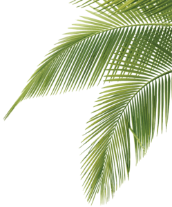 Green Palm Leaves PNG Photo PNG Clip art