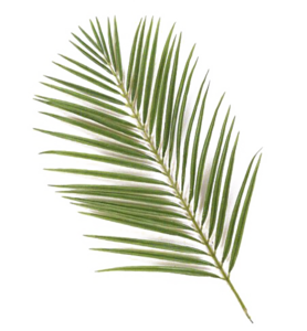 Green Palm Leaves PNG Photos PNG Clip art