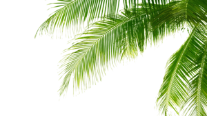 Green Palm Leaves PNG Pic PNG Clip art