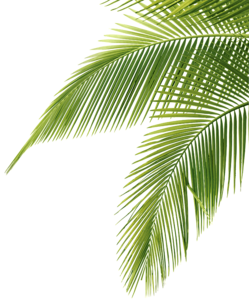 Green Palm Leaves PNG Picture PNG Clip art