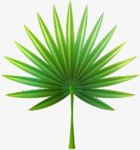 Green Palm Leaves PNG Transparent Image PNG Clip art