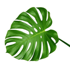 Green Palm Leaves Transparent PNG PNG Clip art
