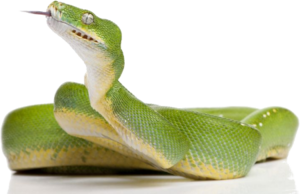 Green Snake PNG Clipart PNG Clip art