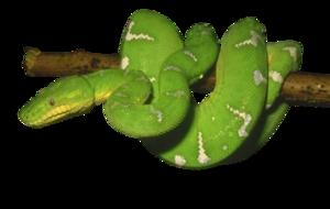 Green Snake PNG Photos PNG Clip art
