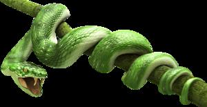 Green Snake PNG Transparent Image PNG Clip art