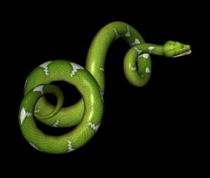 Green Snake Transparent Background PNG Clip art
