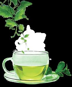 Green Tea PNG Clipart PNG Clip art