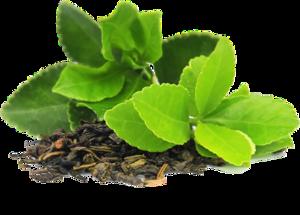 Green Tea PNG Transparent Image PNG Clip art