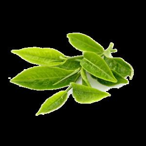 Green Tea Transparent PNG PNG Clip art