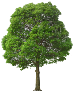 Green Tree PNG PNG Clip art