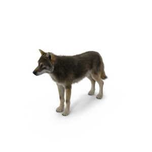 Grey Wolf PNG Pic PNG Clip art