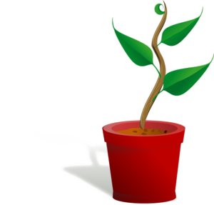 Growing Plant PNG Free Download PNG Clip art