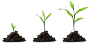 Growing Plant PNG HD PNG Clip art