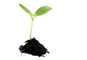 Growing Plant PNG Image PNG Clip art