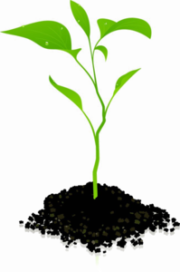 Growing Plant PNG Photos PNG Clip art