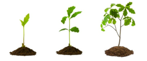 Growing Plant PNG Picture PNG Clip art
