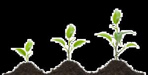 Growing Plant PNG Transparent Image PNG Clip art