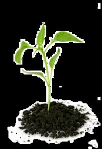 Growing Plant PNG Transparent Picture PNG Clip art