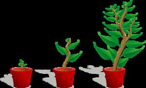 Growing Plant PNG Transparent PNG image