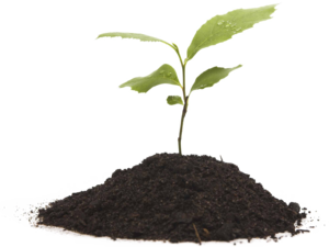 Growing Plant Transparent Background PNG Clip art