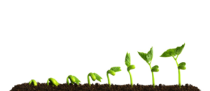 Growing Plant Transparent PNG PNG Clip art
