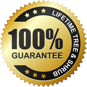 Guarantee Transparent PNG PNG Clip art